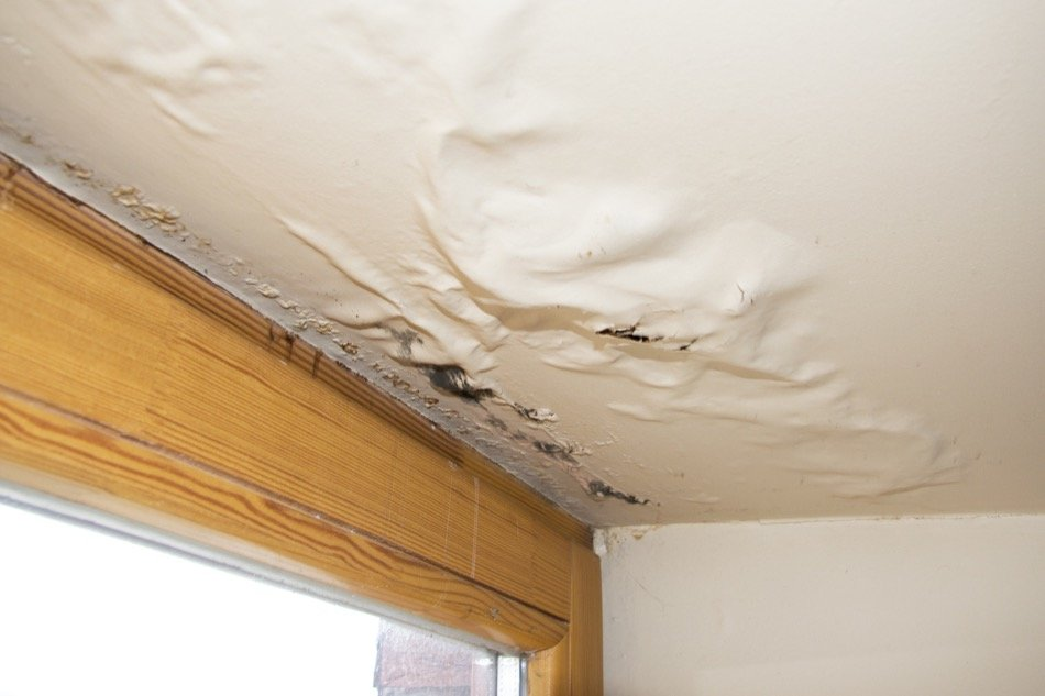 How to Remove Mould in the Home